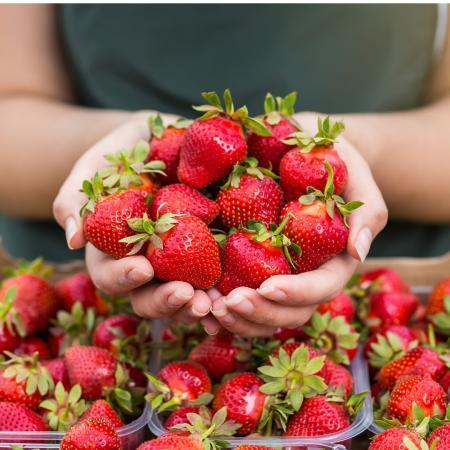 Les fraises Françaises sont de retour !